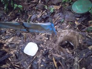 pit trap2