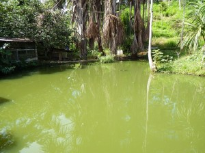 fish pond low